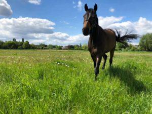 Eine tiefe Seelenverbindung zu Pferden
